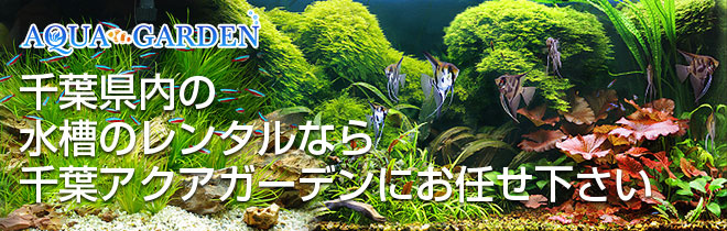 千葉県 水槽レンタル