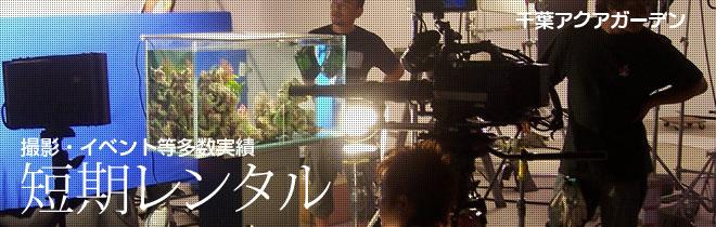 千葉県の撮影・イベント水槽レンタル