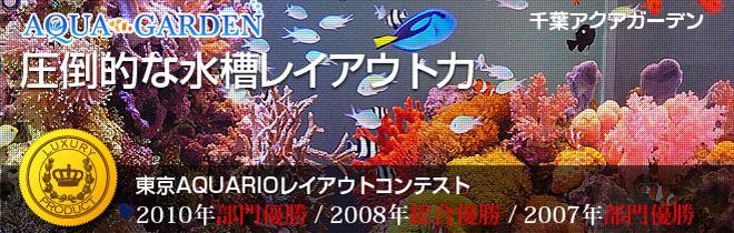 千葉県 コンテスト優勝者の水槽 レンタル