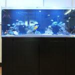 オフィス受付に迫力ある120cm海水魚水槽