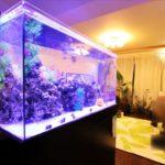 個人宅リビングの90cm海水魚水槽