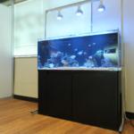 船橋市 オフィス 120cm海水魚水槽のその後水槽写真