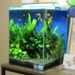 千葉市 個人宅のリビング 30cm淡水魚水槽水槽写真
