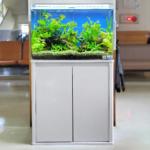 市原市 救急センター 60cm淡水魚水槽水槽写真